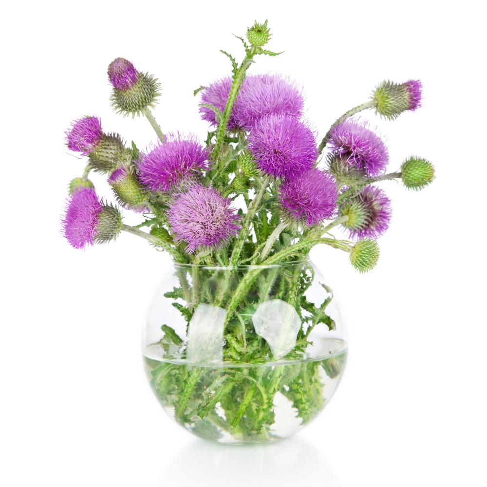 Vase Full of Burdock Flowers